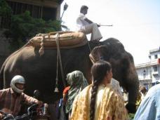 More elephants on the street, Ahmedabad