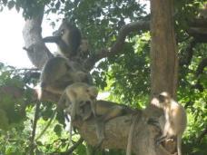 Monkeys, monkeys and more monkeys!