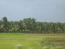 Fields in the outskirts of Pondicherry